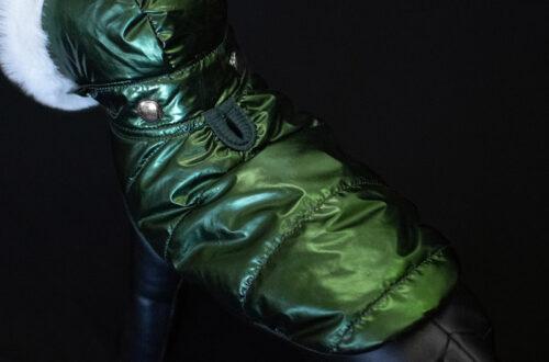 Hunter green dog parka