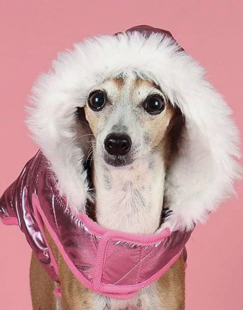 Pink winter dog coat