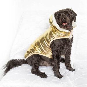 Gold Metallic Dog Coat
