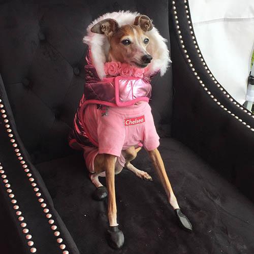 Woofstock Pink Dog Coat