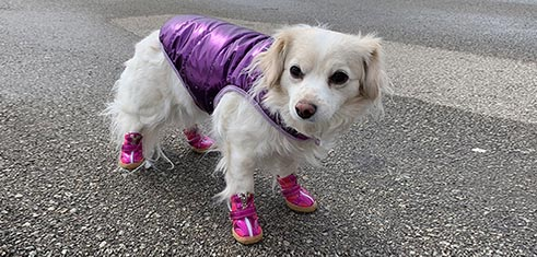 Purple Posh Dog Coat