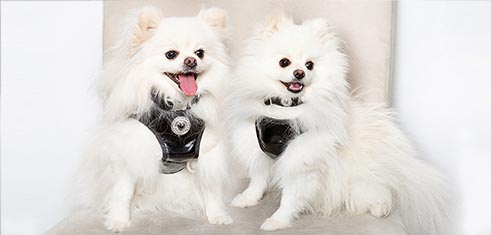 Embellishment Dog Harness