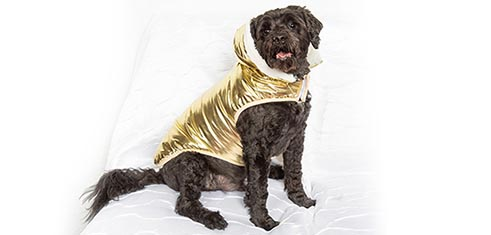 Gold Dog Coats