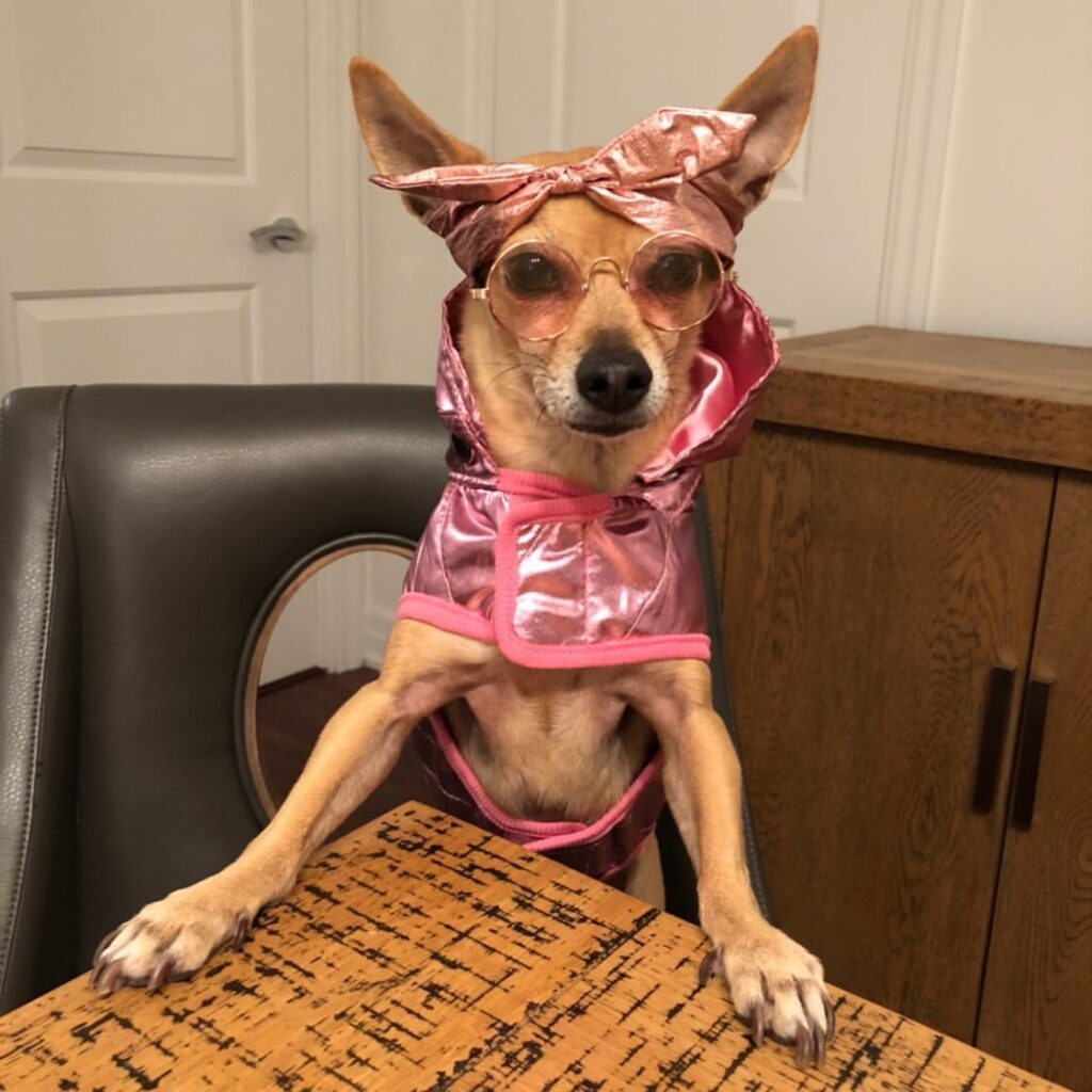 Pink dog coat with hood