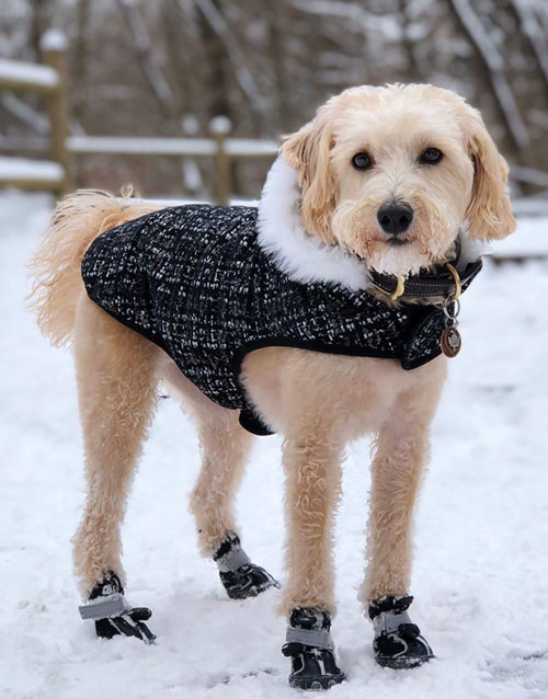 Black dog boots for winter
