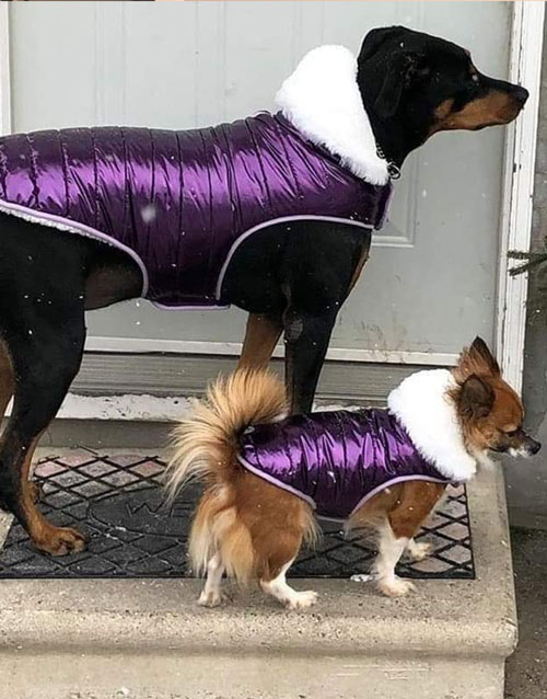 Purple dog coat xxs xxl