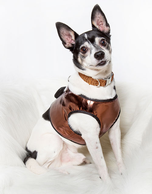 Copper Dog Harness