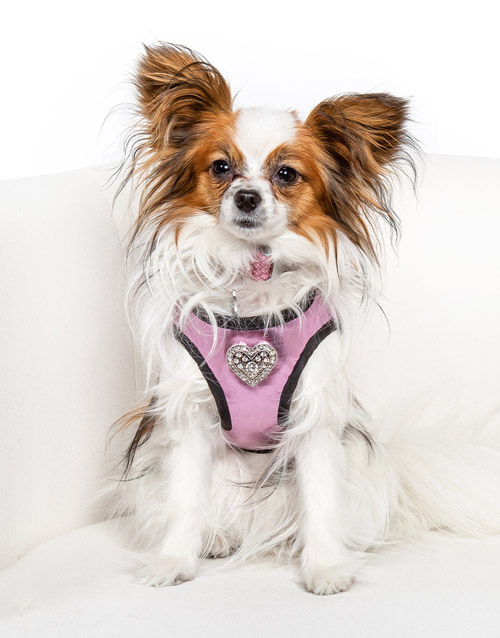Pink Embellished Dog Harness