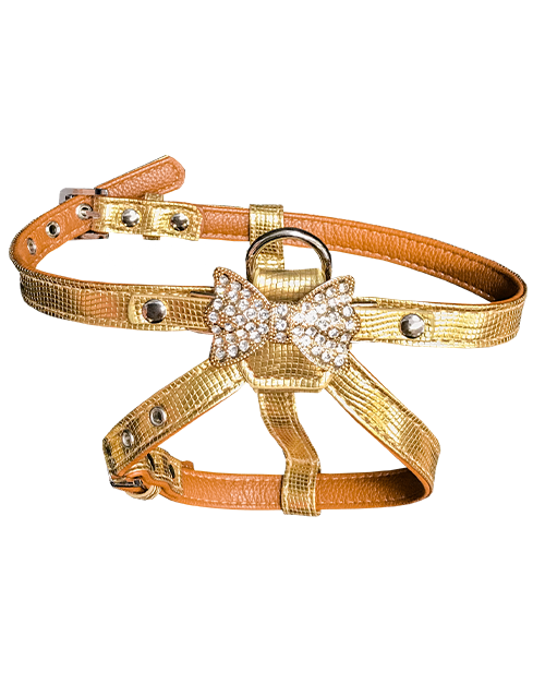 gold dog harness with bow charm