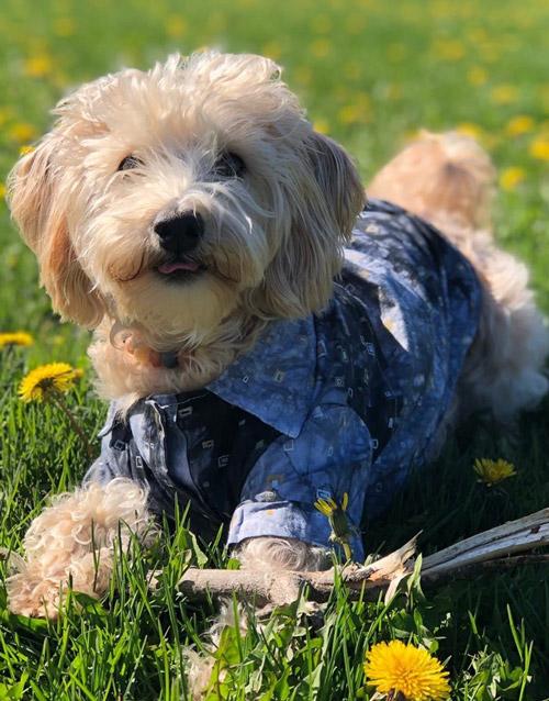 Grey Dog T-Shirt