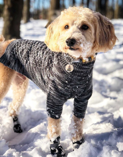 Grey Dog Sweater