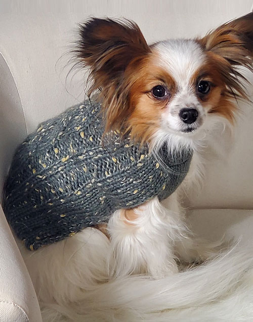 Grey dog sweater