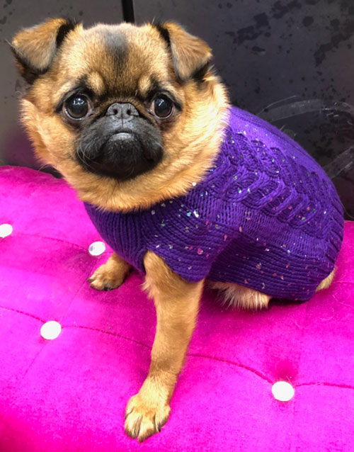 Purple dog sweater